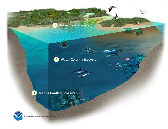benthic marine ecosystems Fisheries management and vulnerable marine ecosystems in the antarctic compared to many global ocean areas where bottom fishing occurs, the southern ocean is characterised by extremely limited data on both the prevailing bottom topography and associated benthic marine ecosystems.